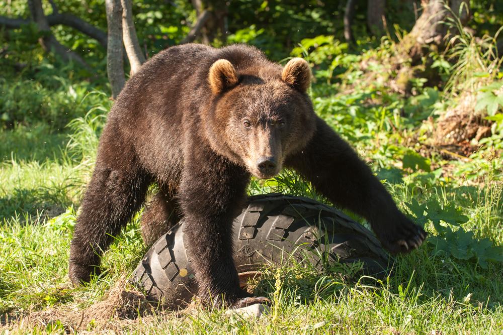 Bear_02648