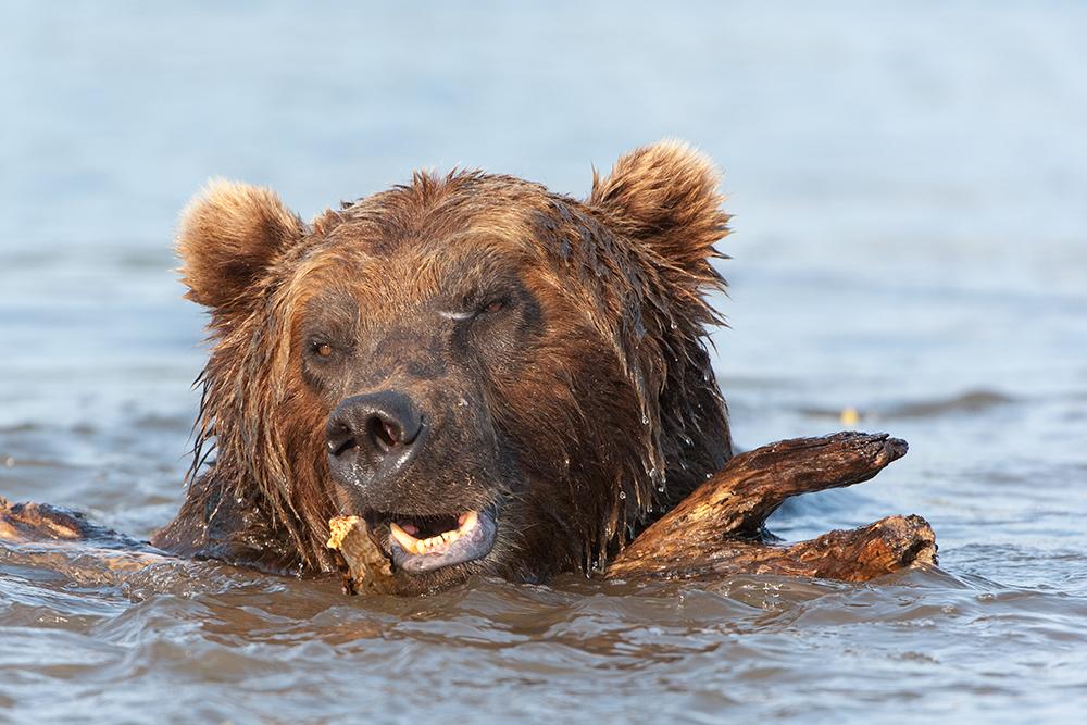 Bear_02300