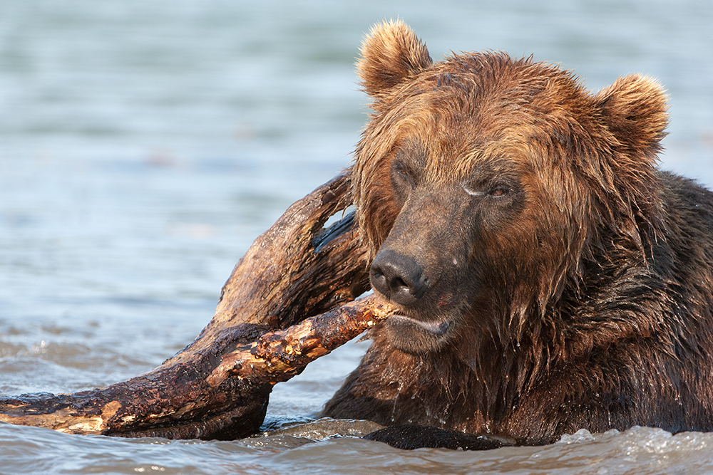 Bear_02291