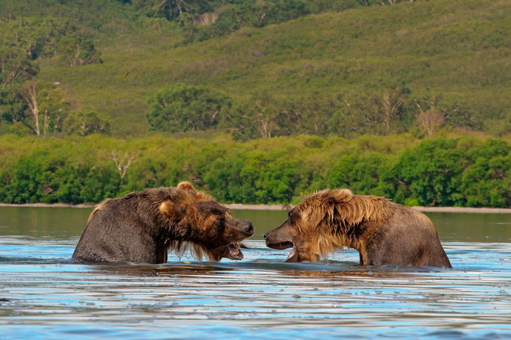 Bear_04490