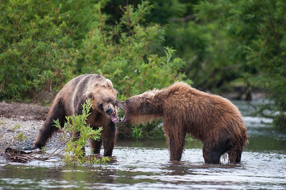 Bear_03077