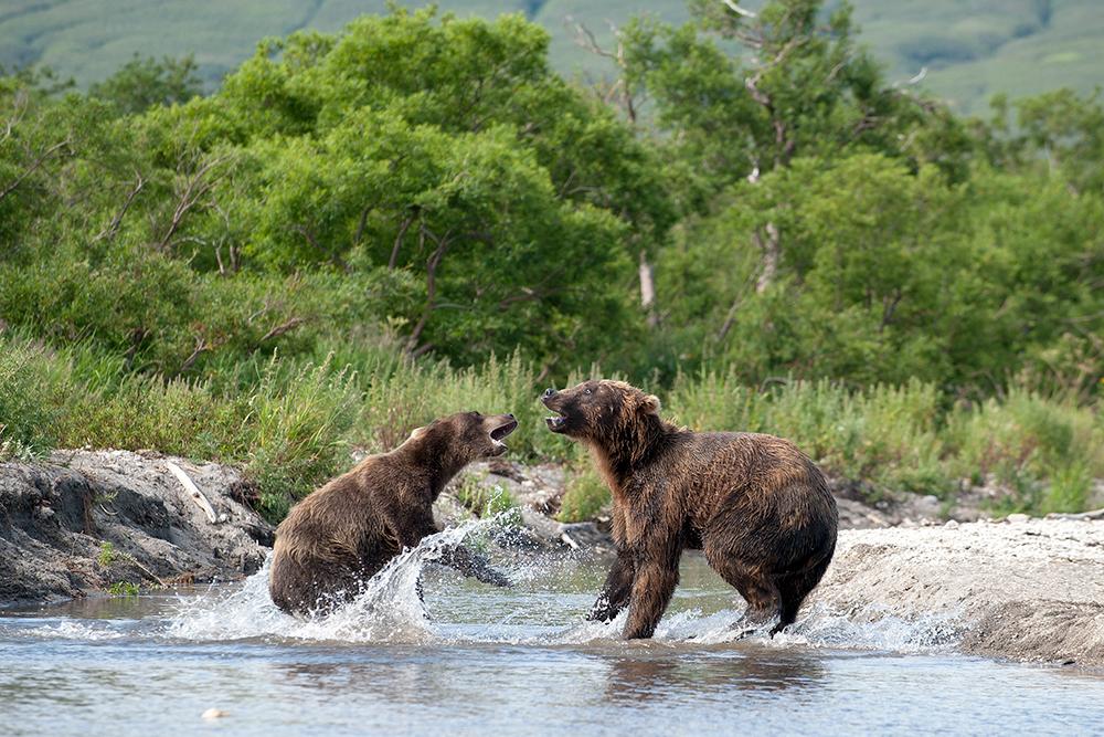 Bear_03357