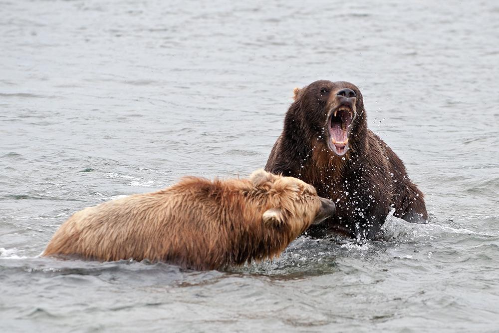 Bear_03591