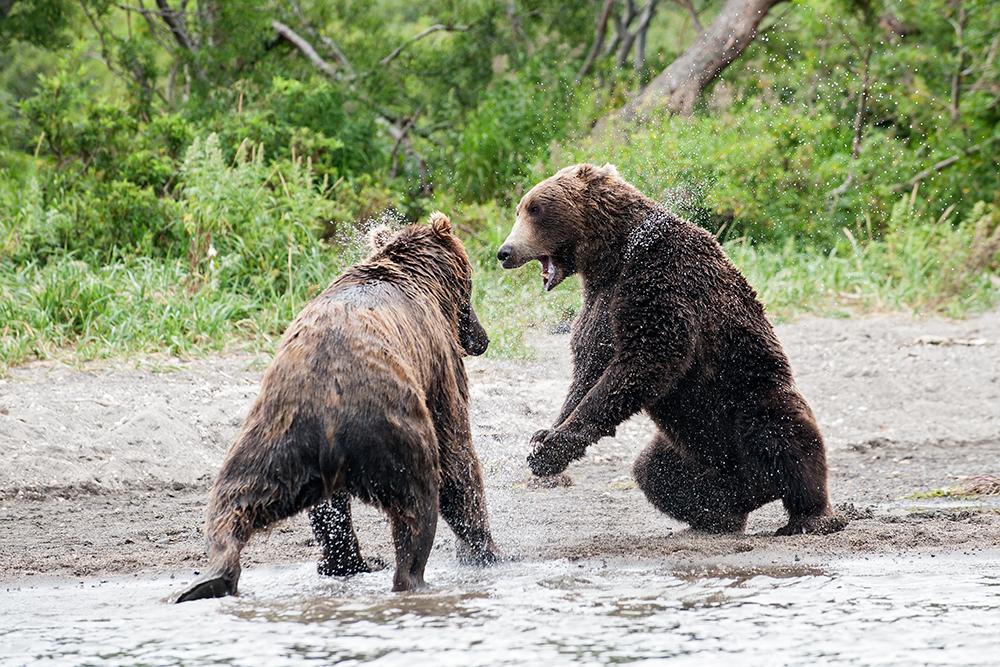 Bear_03616
