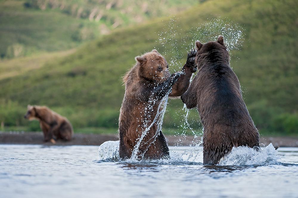 Bear_04441