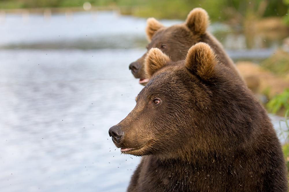 Bear_02473