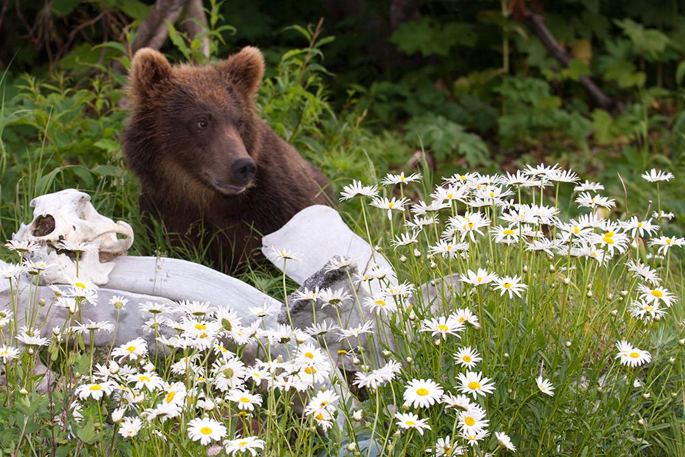 Bear_02309