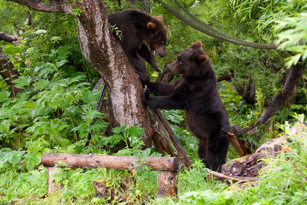 Bear_02311