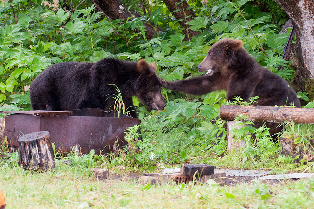 Bear_02312