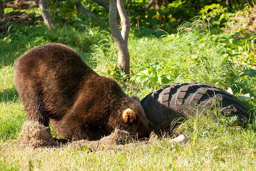 Bear_02647
