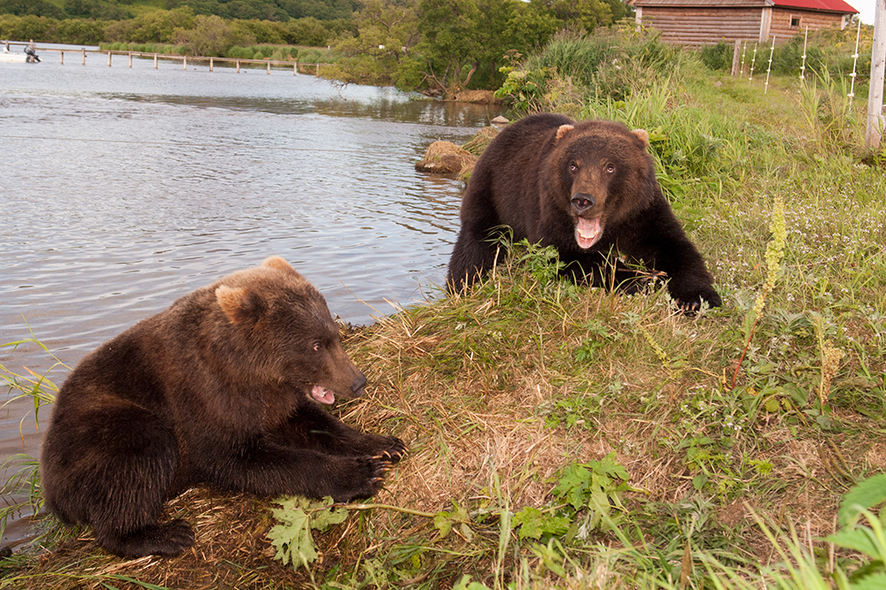 Bear_02478