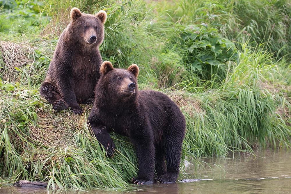 Bear_02446