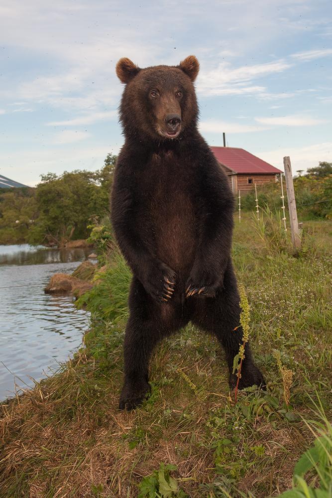 Bear_02481
