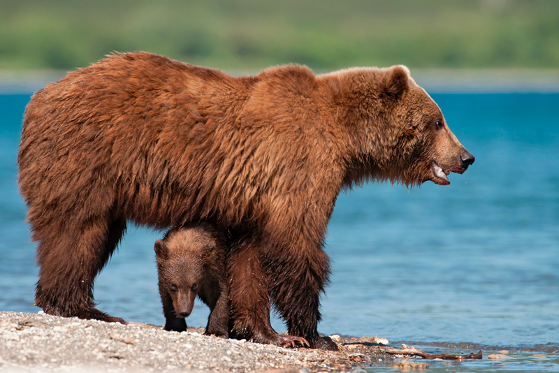 Bear_0182