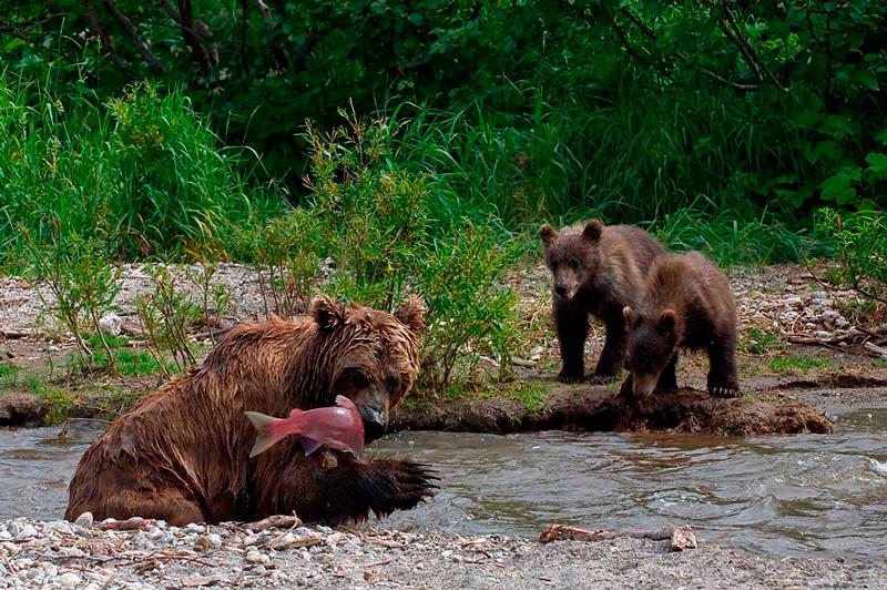 Bear_0116