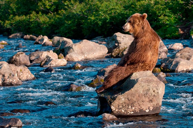 Bear_02149