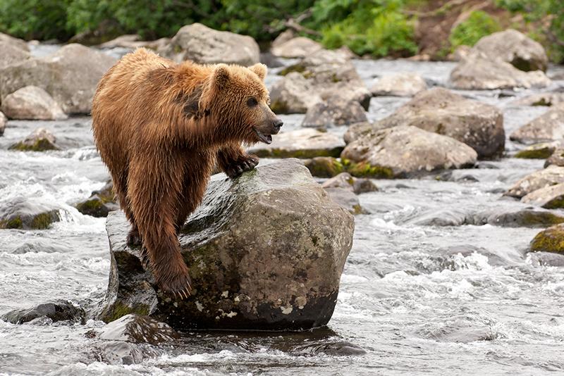 Bear_02203