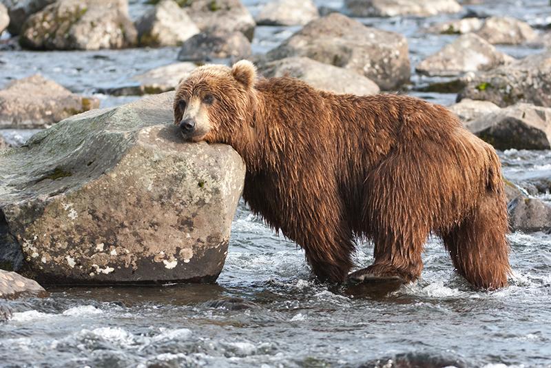 Bear_02079