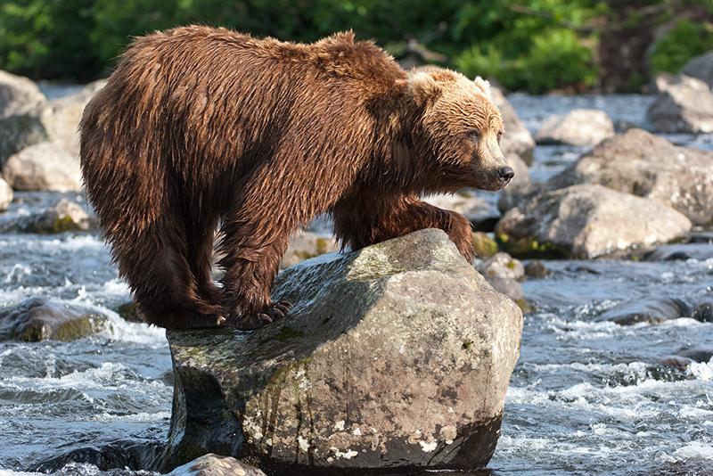 Bear_02080