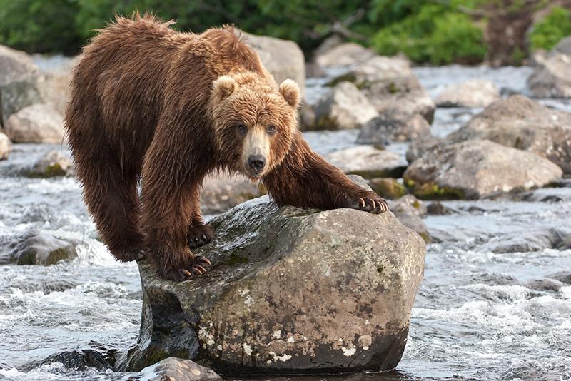 Bear_02084