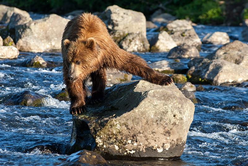 Bear_02115