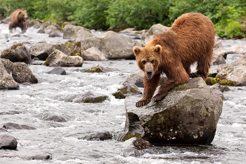 Bear_02180