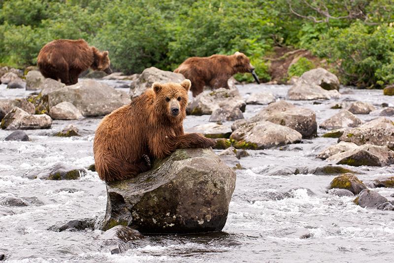 Bear_02192