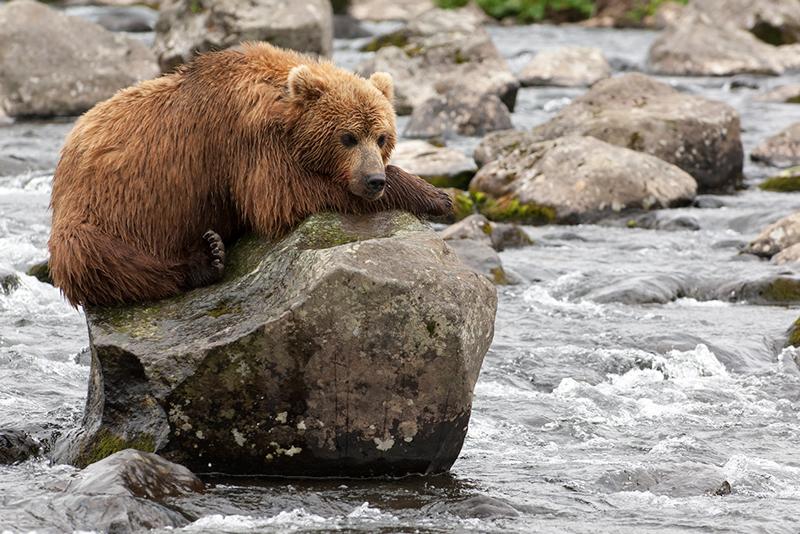 Bear_02197