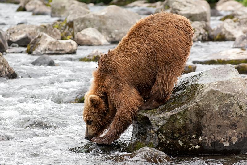 Bear_02198