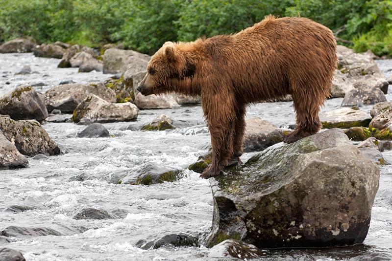 Bear_02199