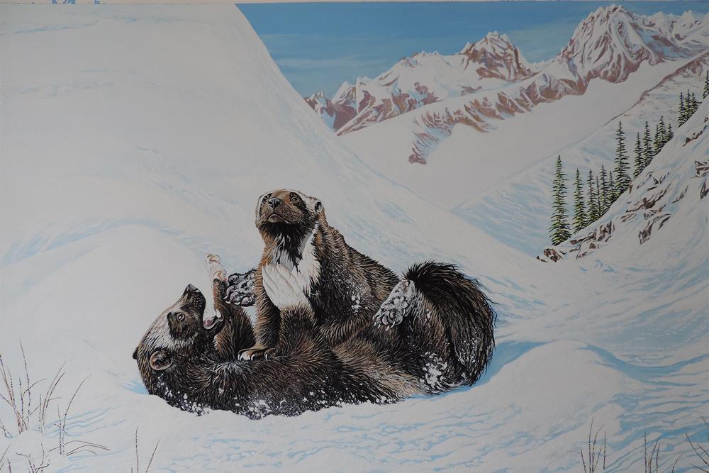 Idaho-wolverine-painting.-J-Cain-006