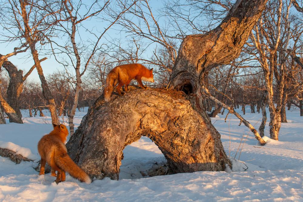 Fox_0595.jpg