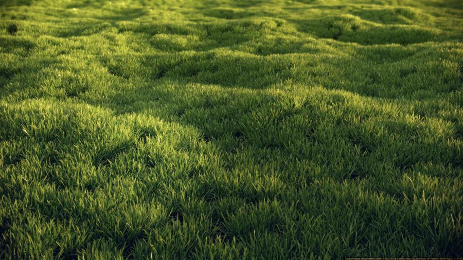 grass2_post