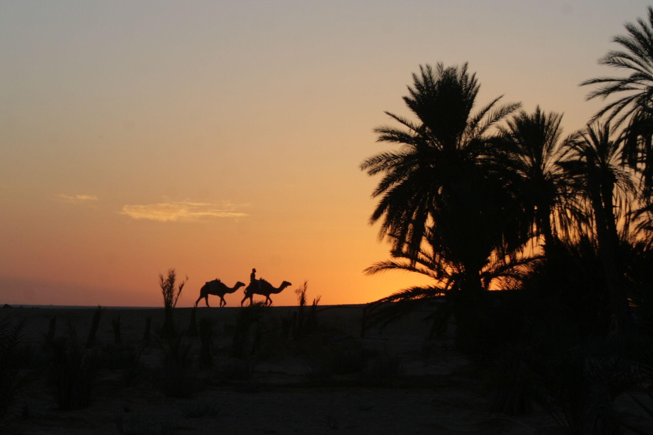 тунис 1098