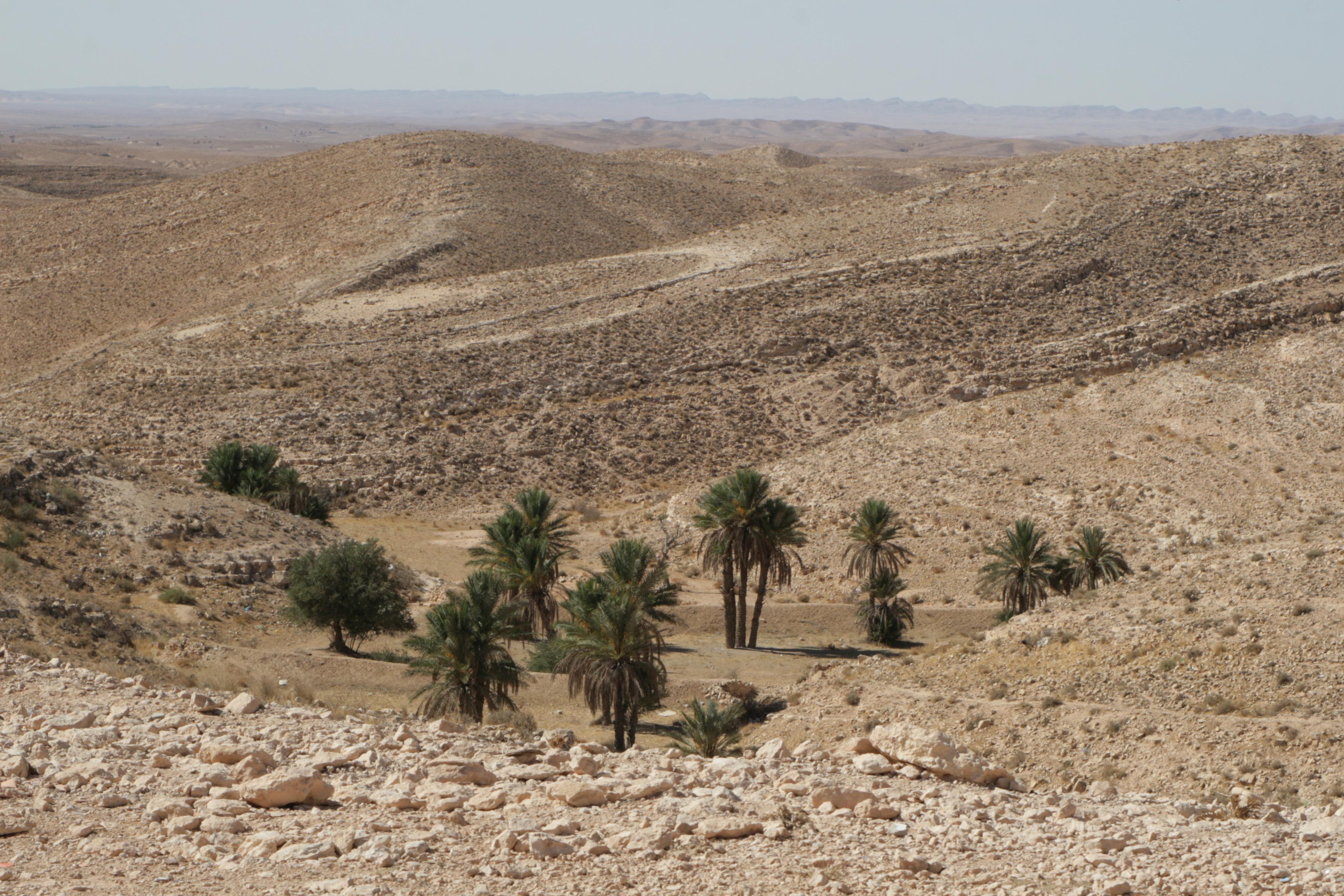 тунис 982