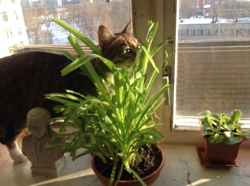 * На фото котик Гудя сегодня утром