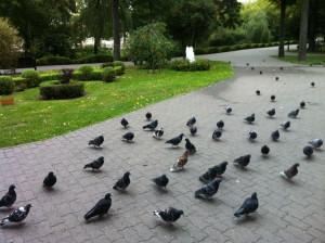 фото 3 голуби у храма Петра и Павла в Гомеле