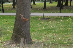 фото 5 та же пушистая белочка в парке