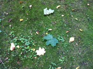фото 11 первые осенние листья в парке