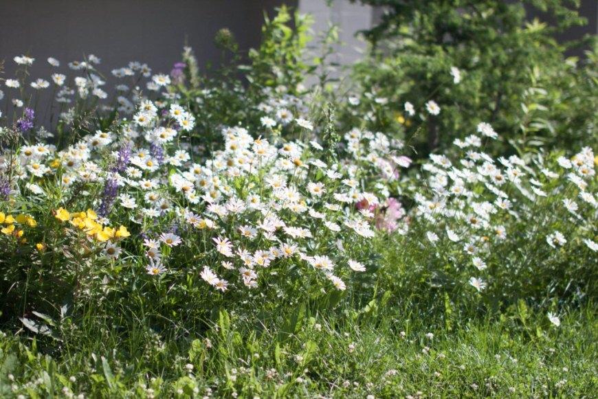 очнулась стихи трава у дома дсп