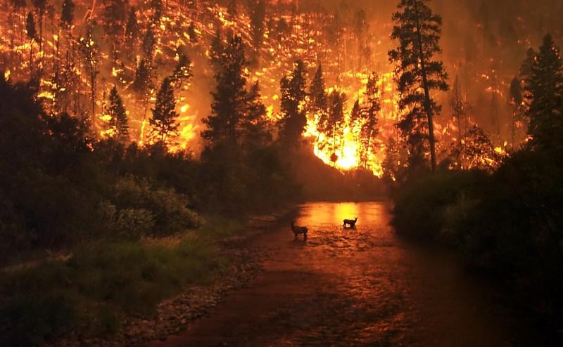 Вместе с горящим лесом гибнут животные, птицы.