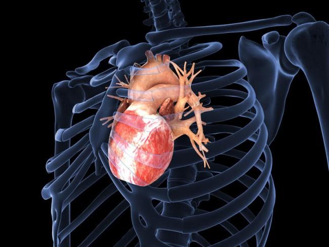 human-heart-650x487