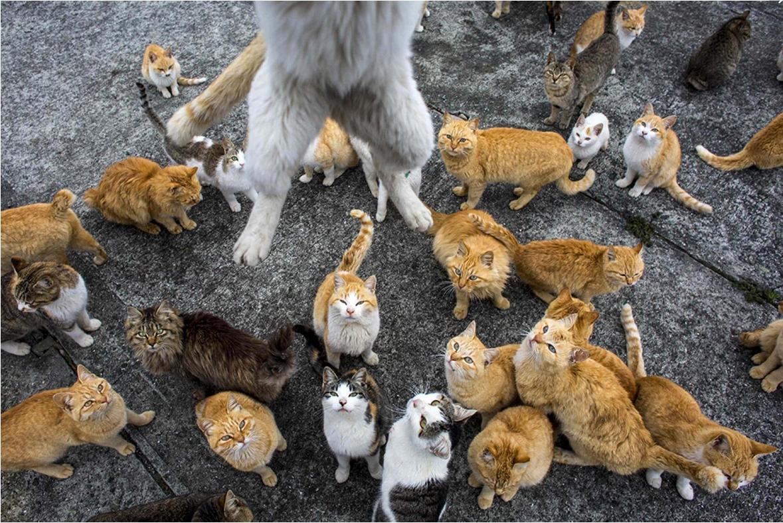 кресла много животных дома приколы картинки стоит подойти поближе