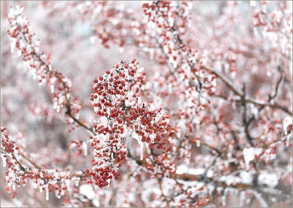 2014_NYC_Snow-5067