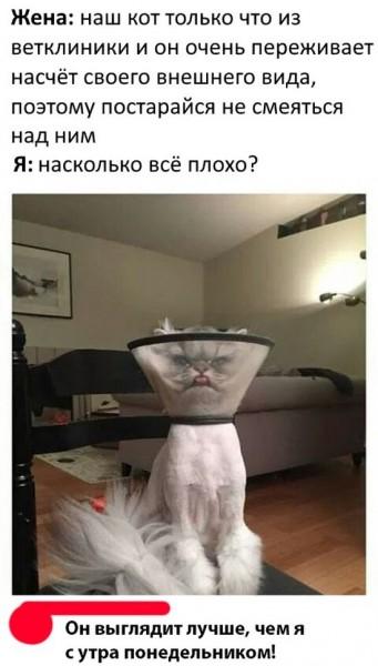 fotopodborka_sredy_118_foto_21.jpg