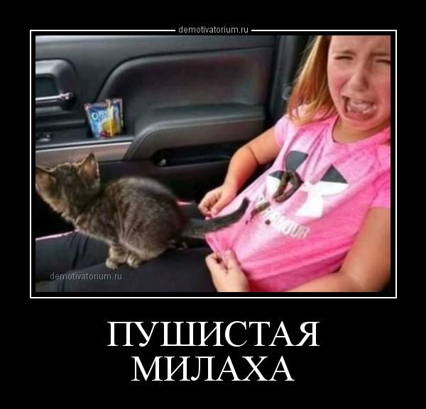 pushistaja_milaha_163537.jpg