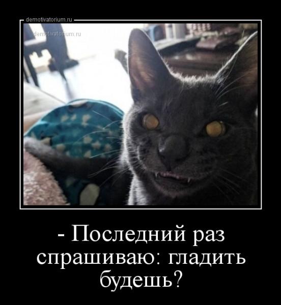 _poslednij_raz_sprashivau_gladit_budesh_163871.jpg