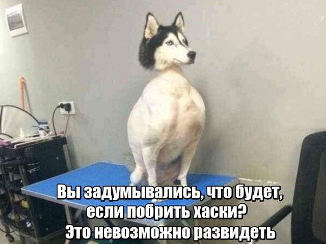 fotopodborka_pjatnicy_85_foto_2.jpg