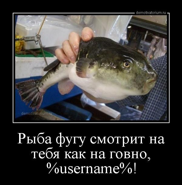 riba_fugu_smotrit_na_tebja_kak_na_govno_username_165770.jpg