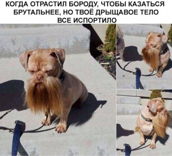 jumor_na_raznye_temy_29_foto_9.jpg